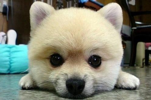 用小动物可爱的照片比喻我和朋友们~~^_^最后一张嘴雷人!