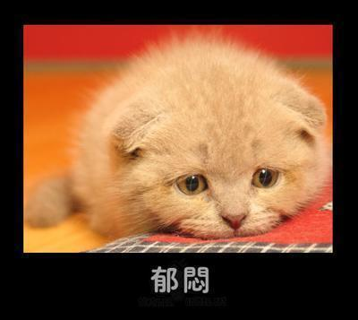 【winnie】超级可爱的动物表情!(图)