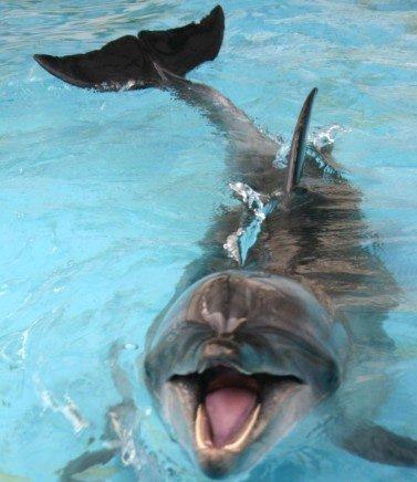【图】看可爱动物的笑脸
