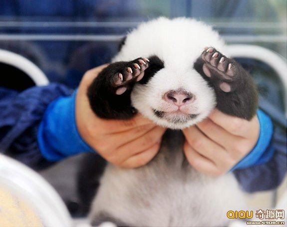 【动物新闻】晒晒全球最可爱的动物宝贝!你有眼福了!