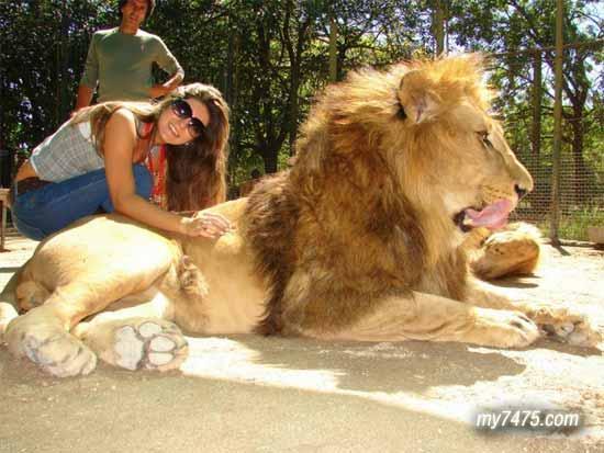 阿根廷的卢汉动物园(Lujan Zoo)是世界上最危险的和最有争议的动物园。因为在这里允许游客与世界上最危险的动物亲密接触。只要你支付50美元,就可以骑狮子,抱老虎,和熊摔跤,还可以拿奶瓶去给成年猛兽喂食,只要你有足够的胆量,还有就是舍得花钱就可以。 很多人认为这是个疯狂的动物园,但参与者却认为这是勇敢者的游戏,在和这些危险动物亲密接触者当中不乏一些天真的孩子,也许对于他们来说这里除了乐趣就是乐趣。试问如果是你,有胆量去尝试吗?毕竟看似驯化了的动物,其本质还是猛兽啊!