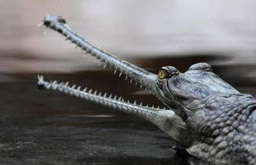 稀奇古怪的动物 - 开心网转帖
