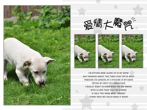 给狗狗们一个家吧 宝山流浪狗基地不是王阿姨那里,是上海小动物保护
