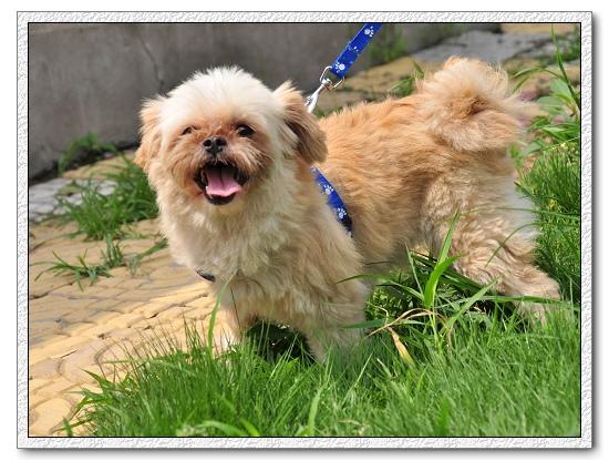 是上海小动物保护