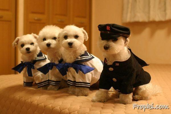 泰迪狗狗 - 开心网转帖
