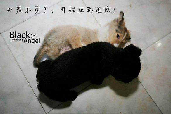 史上最可爱的小猫咪