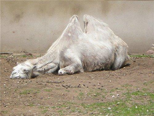 牛人汇集的28张动物睡觉姿势,超可爱!