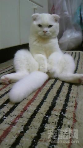 叠小猫的方法步骤图片